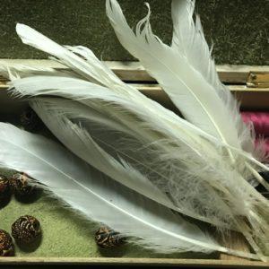 Лебединые перья на удачу