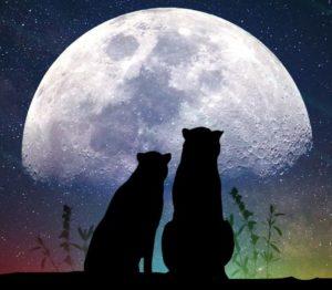 12 oktyabrya Luna 300x262 - 12 октября 2020, понедельник